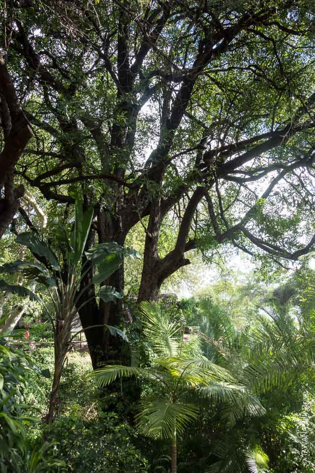 Waterberry tree du Marina Lodge