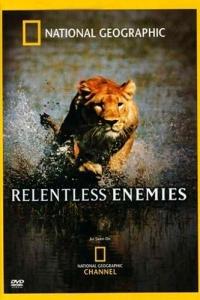 DVD_Joubert_Lions-et-buffles