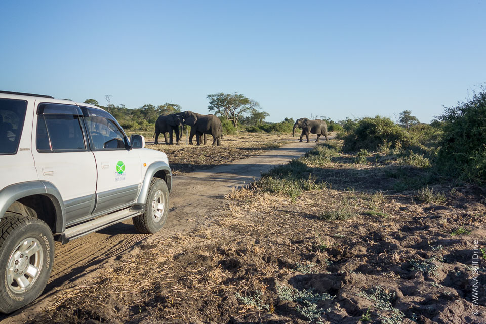 Visiter Chobe : safari self drive
