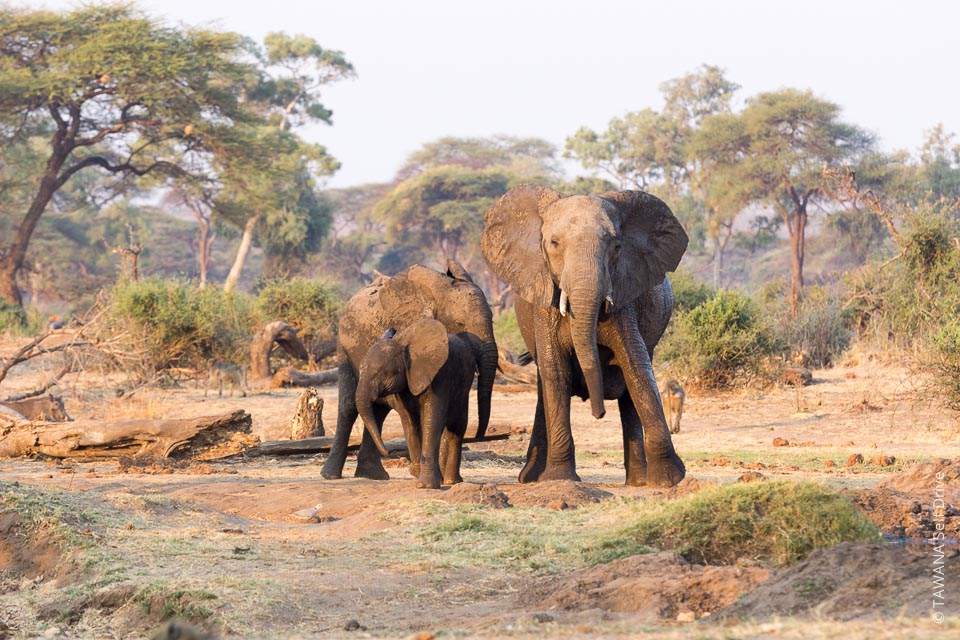 Visiter Chobe : Lesoma Valley