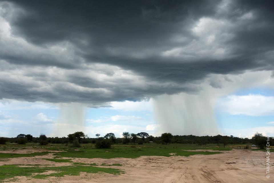 Saison des pluies 2017 : Pistes du Central Kalahari