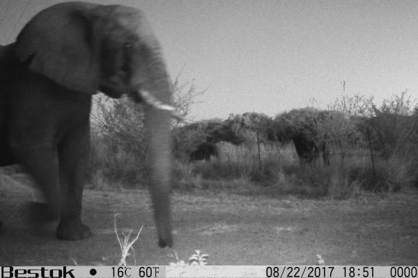 Les éléphants de Kasane