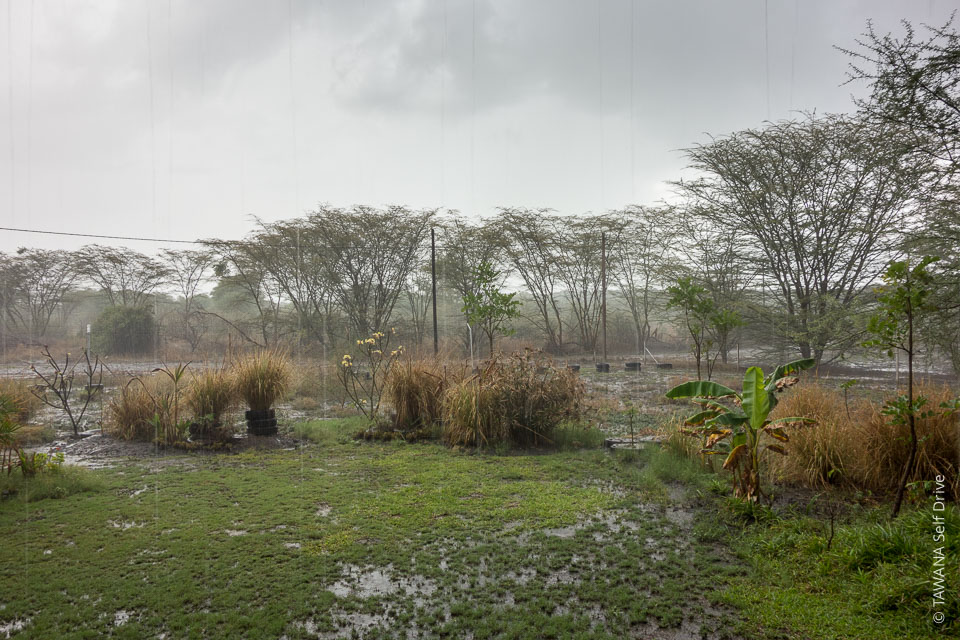 Saison des pluies dans la région de Chobe