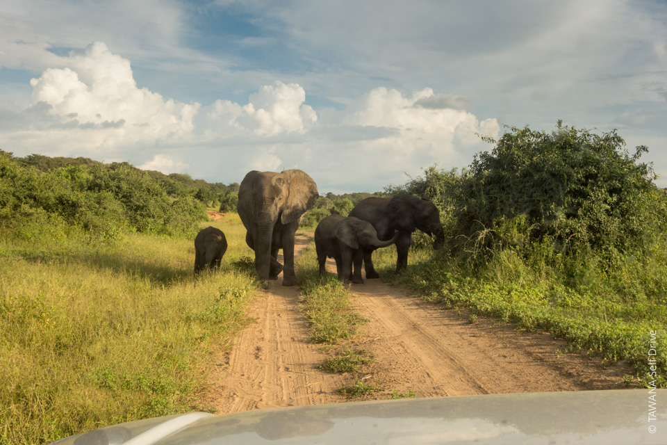 Rencontrez des éléphant lors de votre self drive safari à Chobe