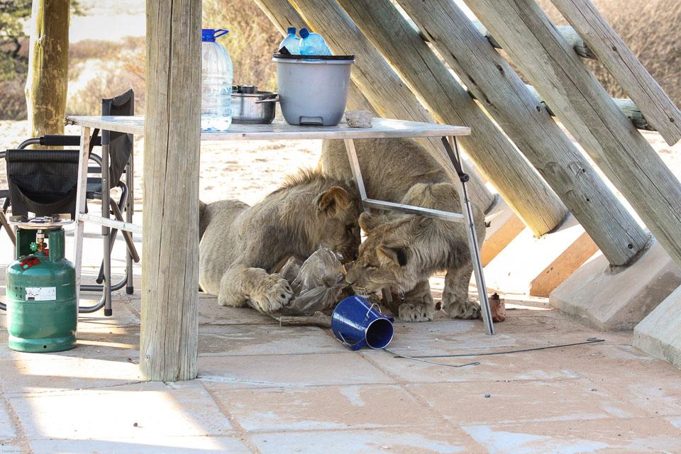 Voyager responsable ensemble : protéger les animaux