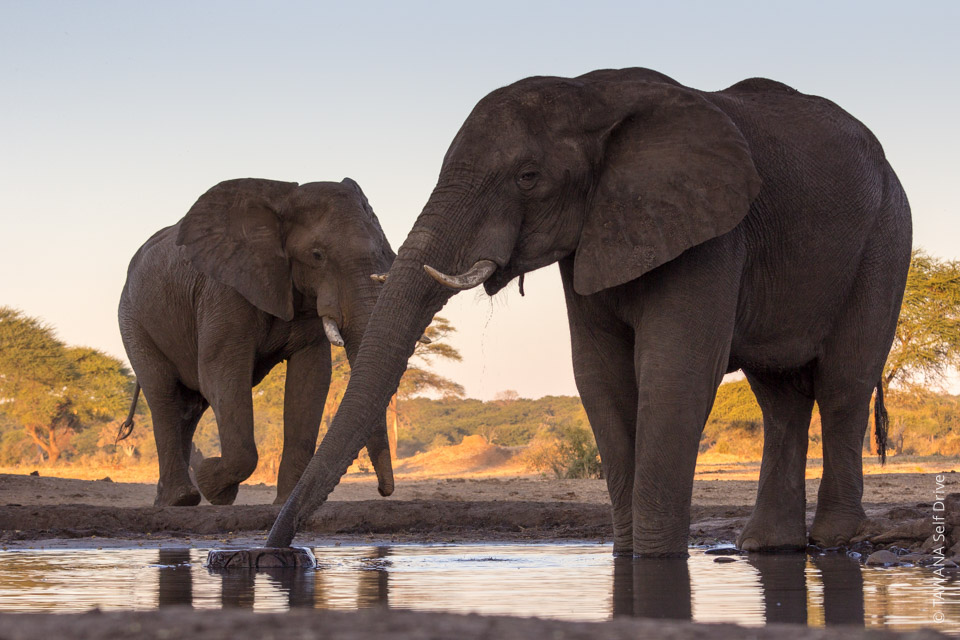 4x4 self-drive itinerary Botswana: Elephants of Senyati