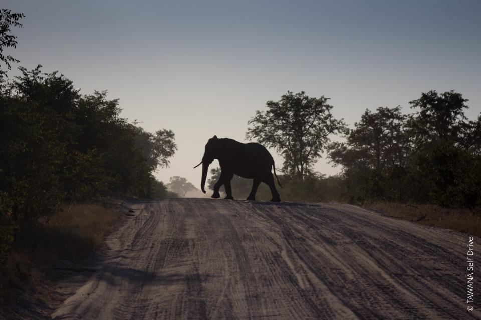 Sécurité dans les campings au Botswana : le bon comportement avec les éléphants