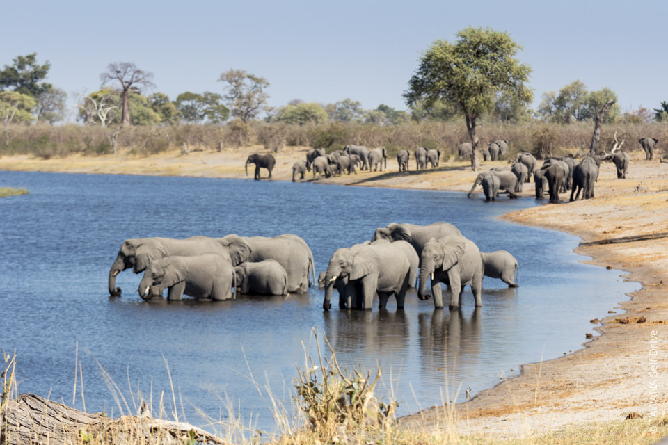 Self-drive tour in Chobe, Hwange, Caprivi