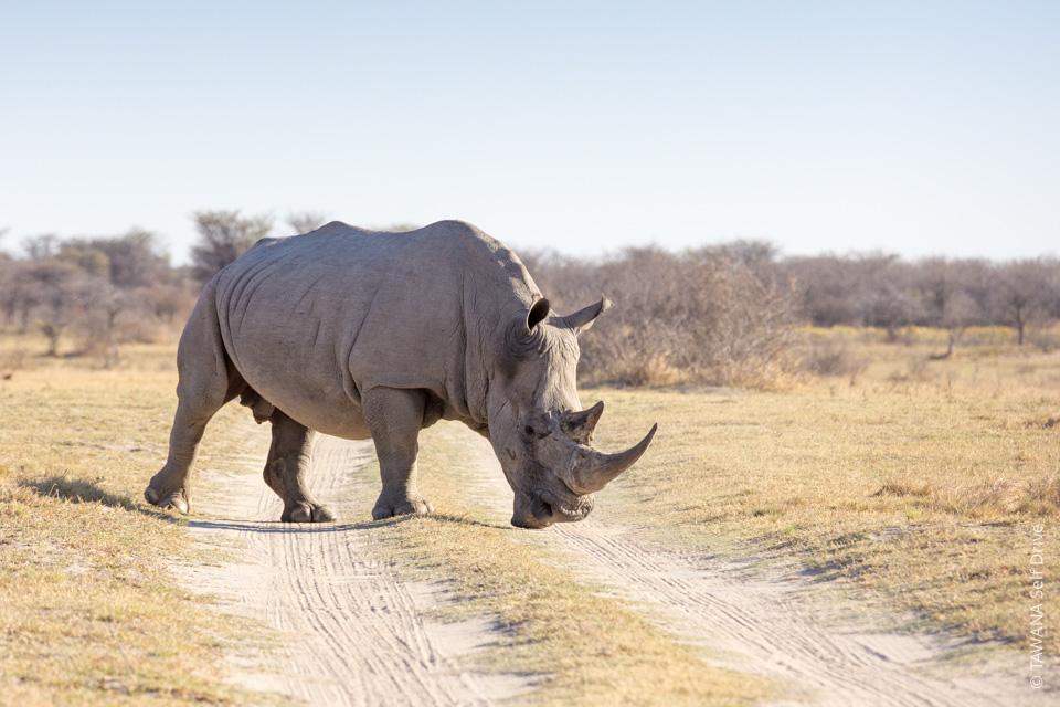 Self drive Afrique du Sud et Botswana : Khama Rhino Sanctuary