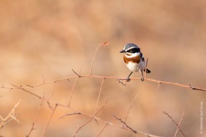 oiseaux de Goo-Moremi au Botswana