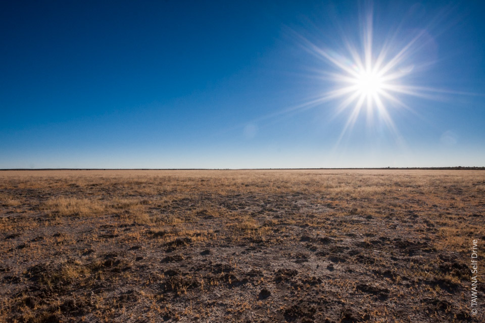 Self-drive safari in the Kalahari: Deception Valley