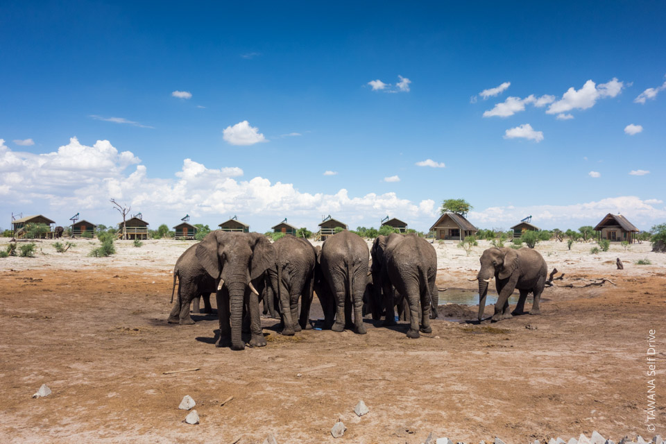 Safari Big Five au Botswana : elephant sands