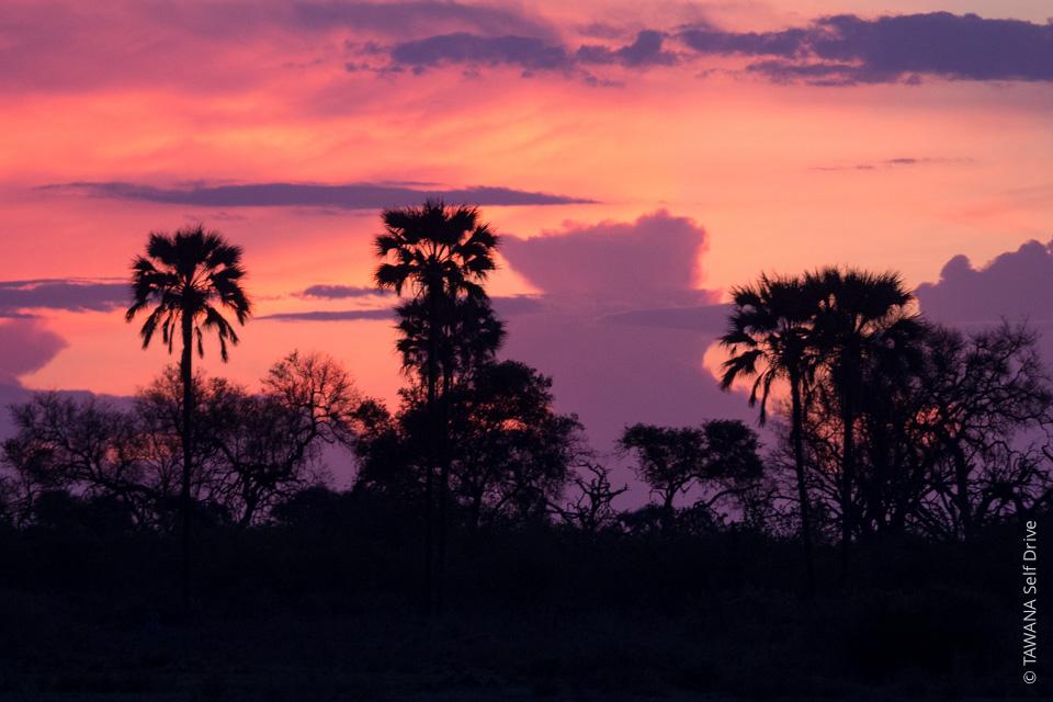 Road trip in Botswana and Namibia: Okavango Delta