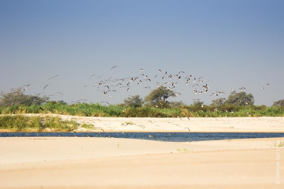 Caprivi en self drive : fleuve Zambèze