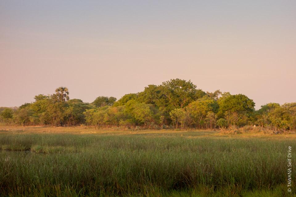 Itinéraire self drive en Zambie : Busanga Plains