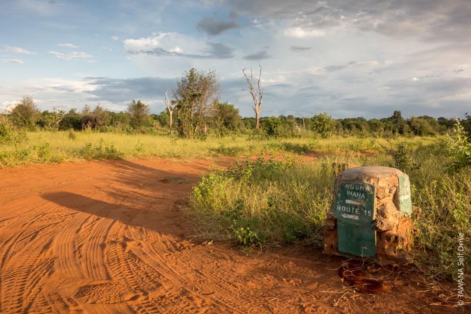 Voyager en self drive : pistes de Chobe